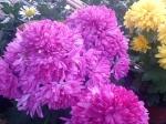 2012 Ősz - Őszi ajánlatunk! | Wágner Kert kertészet - Aranyhaltól a Zsályáig, minden ami KERT!