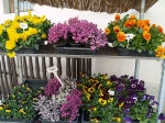 Húsvét 2013 - Húsvéti és tavaszváró dekorációk, ajtódíszek, asztaldíszek, egynyári virágos növények. | Wágner Kert kertészet - Aranyhaltól a Zsályáig, minden ami KERT!