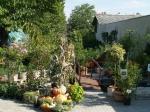 Kertészet - Kertészet | Wágner Kert kertészet - Aranyhaltól a Zsályáig, minden ami KERT!