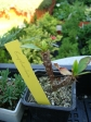 Szikalkerti növények, kaktuszok - Szikalkerti növények, kaktuszok | Wágner Kert kertészet - Aranyhaltól a Zsályáig, minden ami KERT!